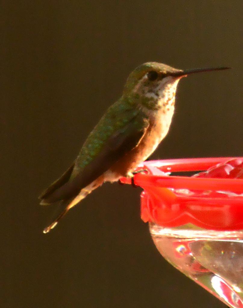 Of Hummingbirds and Mushrooms